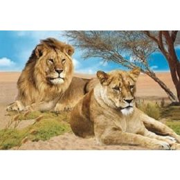 20 Units of 3D Picture-Lion & Lioness - Wall Decor