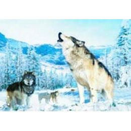 20 Units of 3D Picture-Howling Wolf - Wall Decor