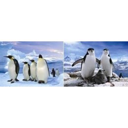 50 Units of 3D Picture-Penguins - Wall Decor