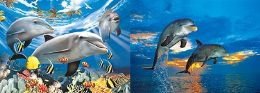 20 Units of 3D Picture 9763--Dolphins w Tropical Fish/Dolphins Jumping - Wall Decor