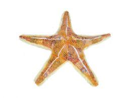 24 Units of Wild Republic Plush Orange Glitter Starfish - Plush Toys