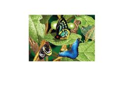 20 Units of 3d Picture 9774--Butterflies On Leaves - Wall Decor