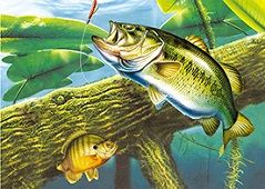 40 Units of 3D Picture Bass in Water - Home Decor
