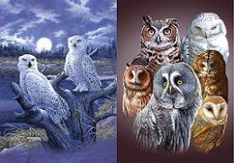 40 Units of 3D Picture Owls - Home Decor