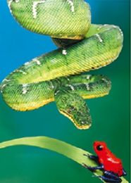40 Units of 3D Picture Green Snake With Red Frog - Home Decor