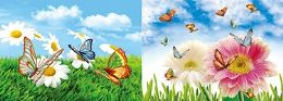 40 Units of 3D Picture Butterflies - Home Decor