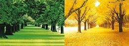 40 Units of 3D Picture Spring Trees Autumn Trees - Home Decor