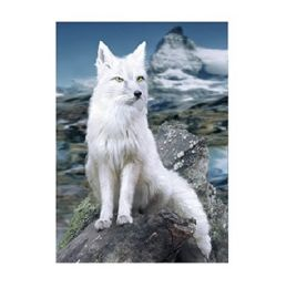 40 Units of 3D Picture White Fox - Home Decor