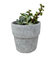 48 Units of Flower Pot 5 Inch - Garden Planters and Pots