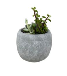 32 Units of Flower Pot - Garden Planters and Pots