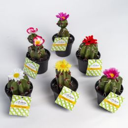 24 Units of Potted Cactus W/flower 6asst 5-6inh Lawn And Garden ht - Garden Hoses and Nozzles