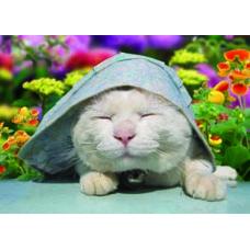 20 Units of 3D Picture-Cat Under A Bonnet - Wall Decor