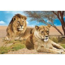 20 Units of 3D Picture-Lion & Lioness - Wall Decor