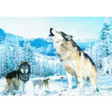 20 Units of 3D Picture-Howling Wolf - 3D Pictures