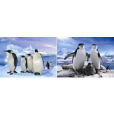 50 Units of 3D Picture-Penguins - 3D Pictures