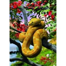 20 Units of 3D Picture-Snake in Tree - 3D Pictures