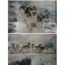 50 Units of 3D Picture-Snowy Wolf Pack/2 Wolves - 3D Pictures