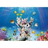 20 Units of 3D Picture-Tropical Fish with Coral - 3D Pictures