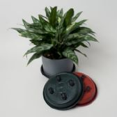 24 Units of Garden Planter Saucer W/4 Wheels Terracotta/green/black - GARDEN PLANTERS/HANGERS/POTS