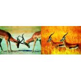 20 Units of 3D Picture 88--African Deer - 3D Pictures