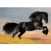 50 Units of 3D Picture 66--Black Stallion - 3D Pictures