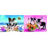20 Units of 3D Picture 72--Boston Terrier Puppies/ Puppies at Beach - 3D Pictures