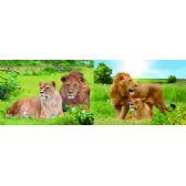 20 Units of 3D Picture 90--Lion and Lioness - 3D Pictures