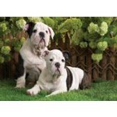 20 Units of 3D Picture 94--Black & White Dogs - 3D Pictures