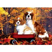 20 Units of 3D Picture 9599--Spaniel Dogs in Wagon - 3D Pictures