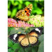 20 Units of 3D Picture 9605--Butterflies - 3D Pictures