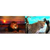 20 Units of 3D Picture 55--Lion/Leopard - 3D Pictures