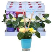 24 Units of Reed Diffuser Flowers Display - Incense