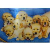50 Units of 3D Picture 47--10 Puppies