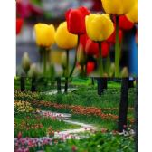 50 Units of 3D Picture 9606--Tulips