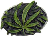 36 Units of Marijuana Belt Buckle