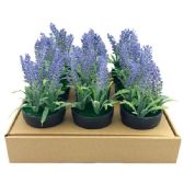 """36 Units of 7.5 """" Lavender in pot"""