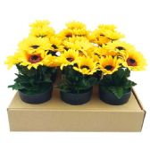 """36 Units of 7.5"""" Sunflower in pot"""