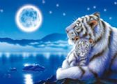 50 Units of 3D Picture 9707--White Tiger and Baby with Moon