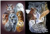 50 Units of 3D Picture 9717--Owls