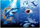 50 Units of 3D Picture 9727--Sharks
