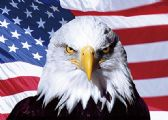 50 Units of 3D Picture 9734--Eagle with Flag