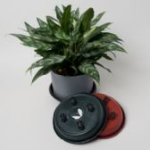 18 Units of Rolling Plant Caddy - Garden Planters and Pots