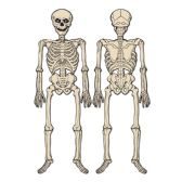 12 Units of Jointed Skeleton ptrd 2 sides w/different designs - Bulk Toys & Party Favors